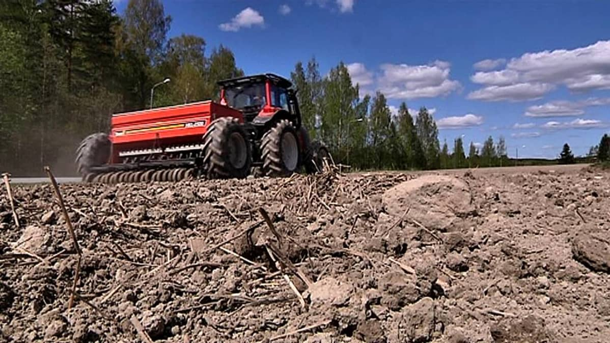 Kylvötöitä tehdään pellolla.