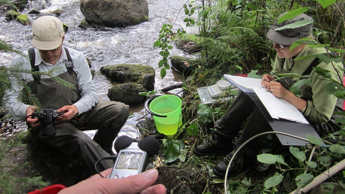 tutkimusjohtaja Ari Haikonen ja assistentti Mirja Hartimo kartoittavat taimenkantaa Ruonanjoella