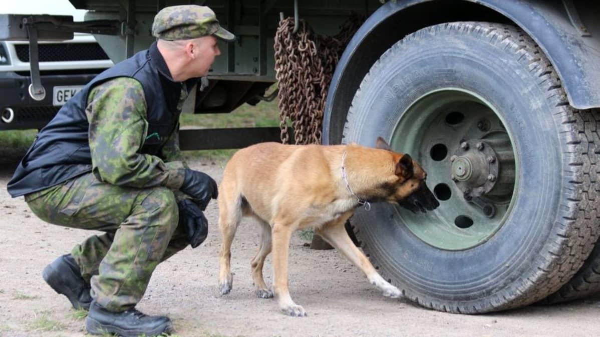 Koira tutkii autonrengasta.