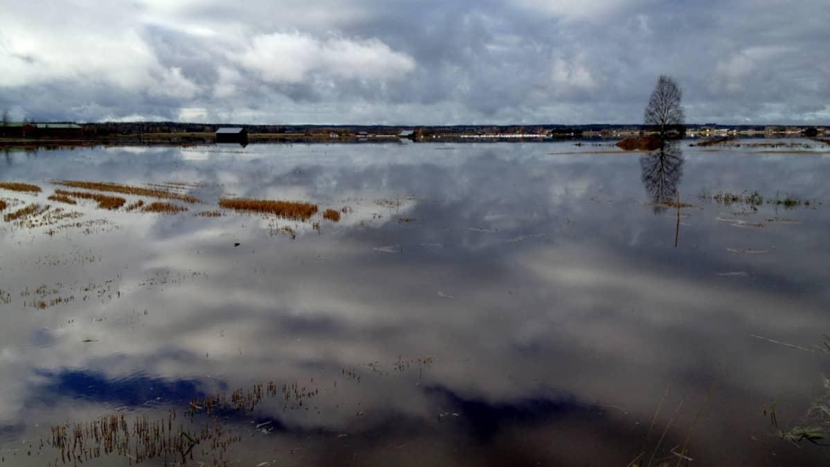 vettä runsaasti pellolla latomaisemassa