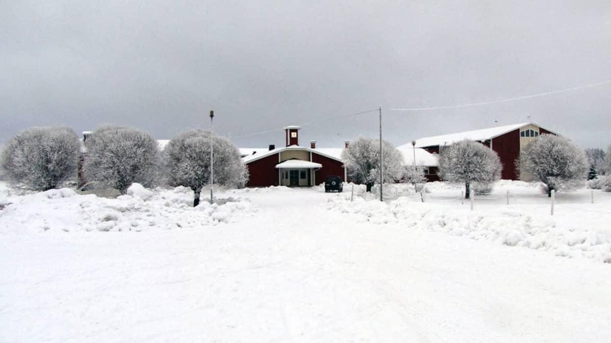 Tuotantorakennuksia Keski-Pohjanmaan maaseutuopiston Perhon toimipisteen pihapiirissä.