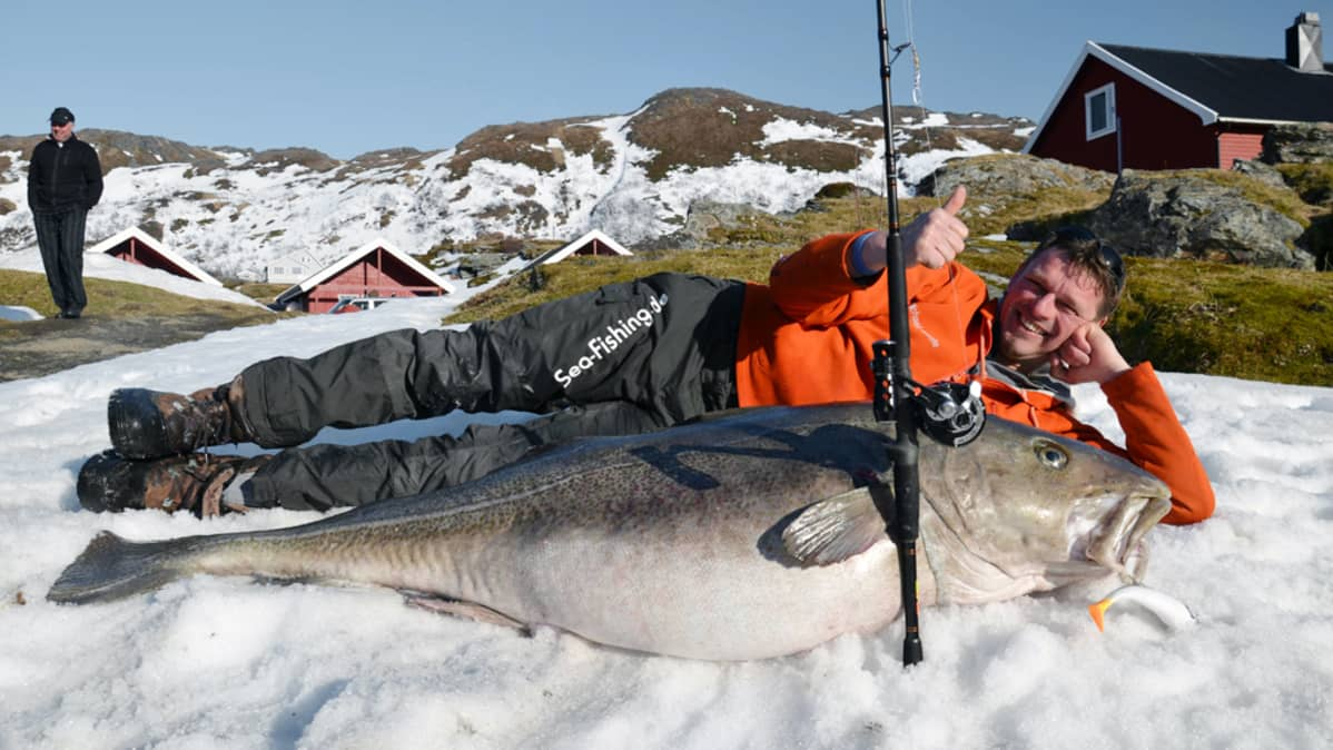 Saksalainen kalastaja Michael Eisele poseeraa 47 kiloa painavan turskan kanssa Norjan Sørøyassa.