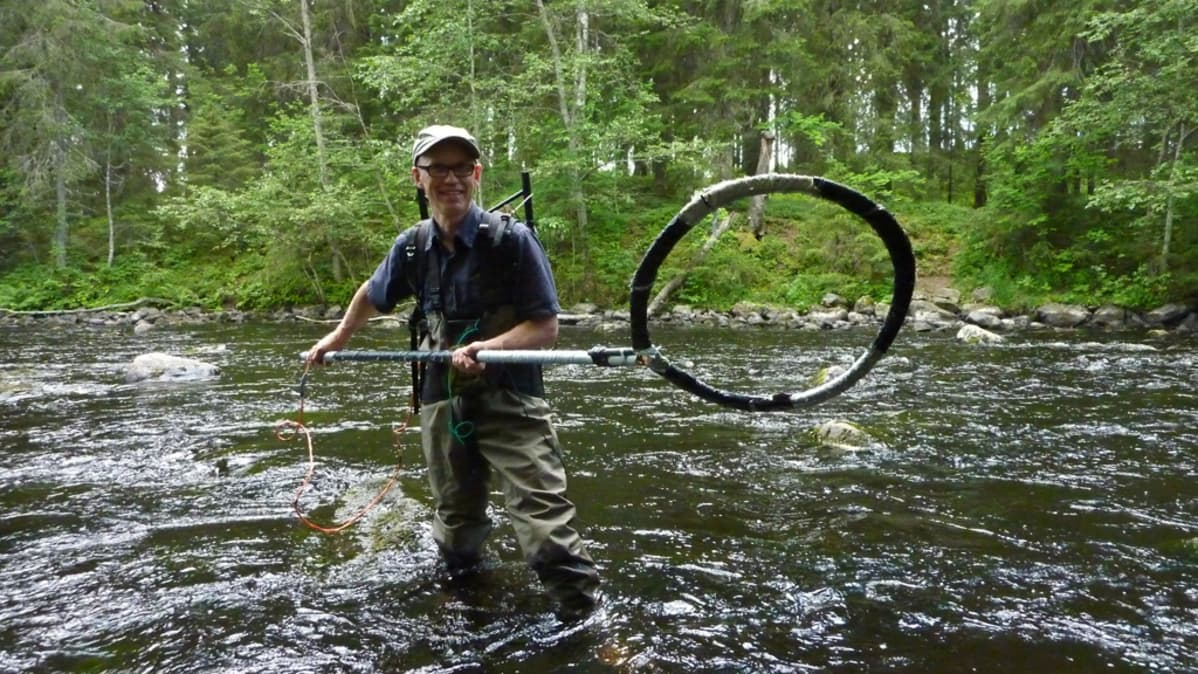 Kalatutkija Pekka Hyvärinen kala-antennin kanssa Varisjoessa