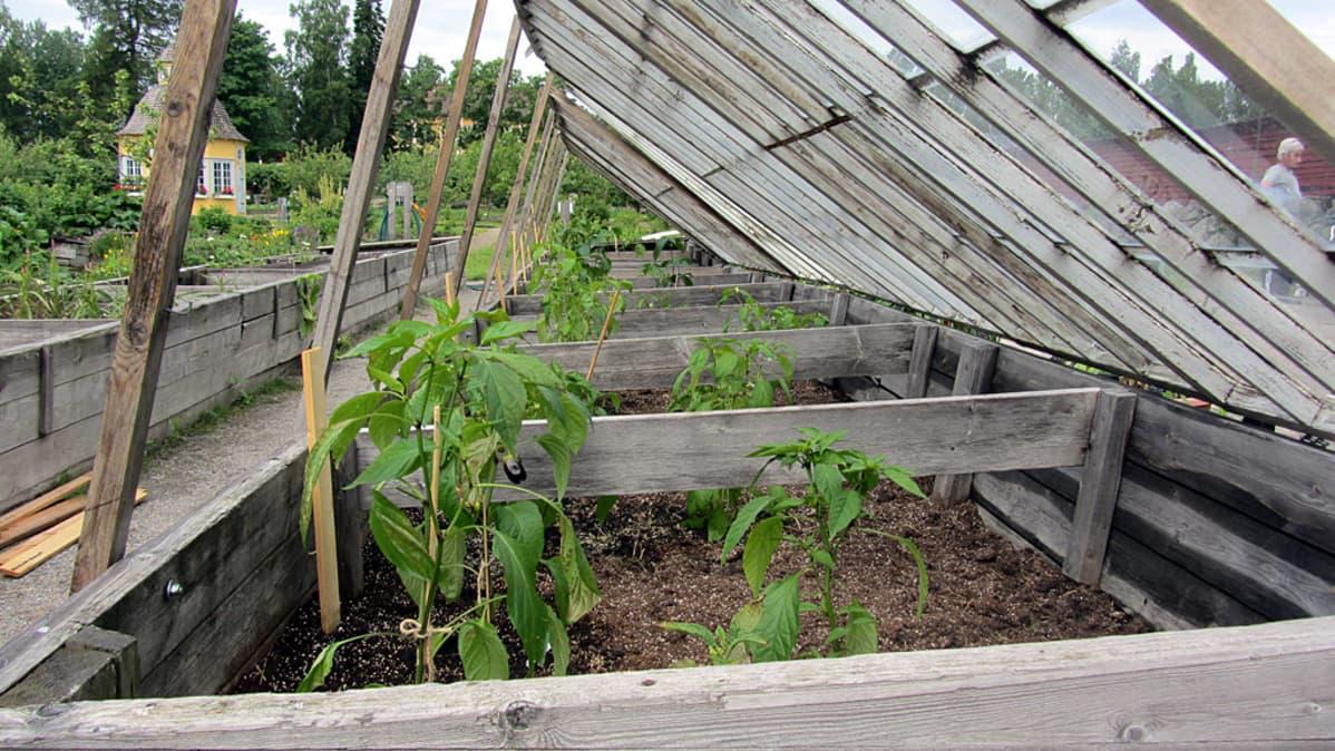 Chilin kasvitusta.