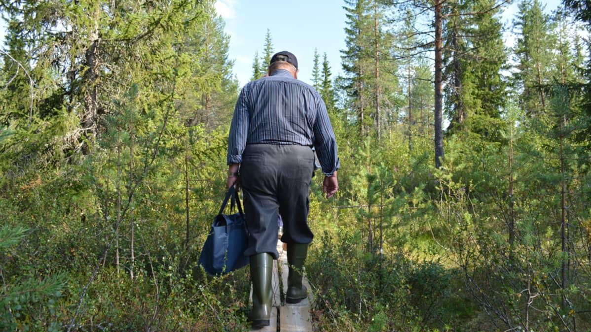 Mies kävelee metsässä pitkospuita pitkin karhukojulle.
