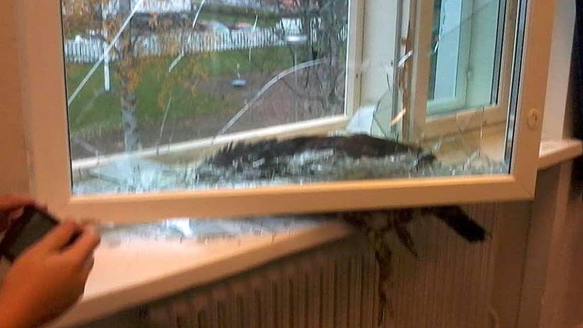 Metso lentänyt ikkunan läpi liikuntasaliin.