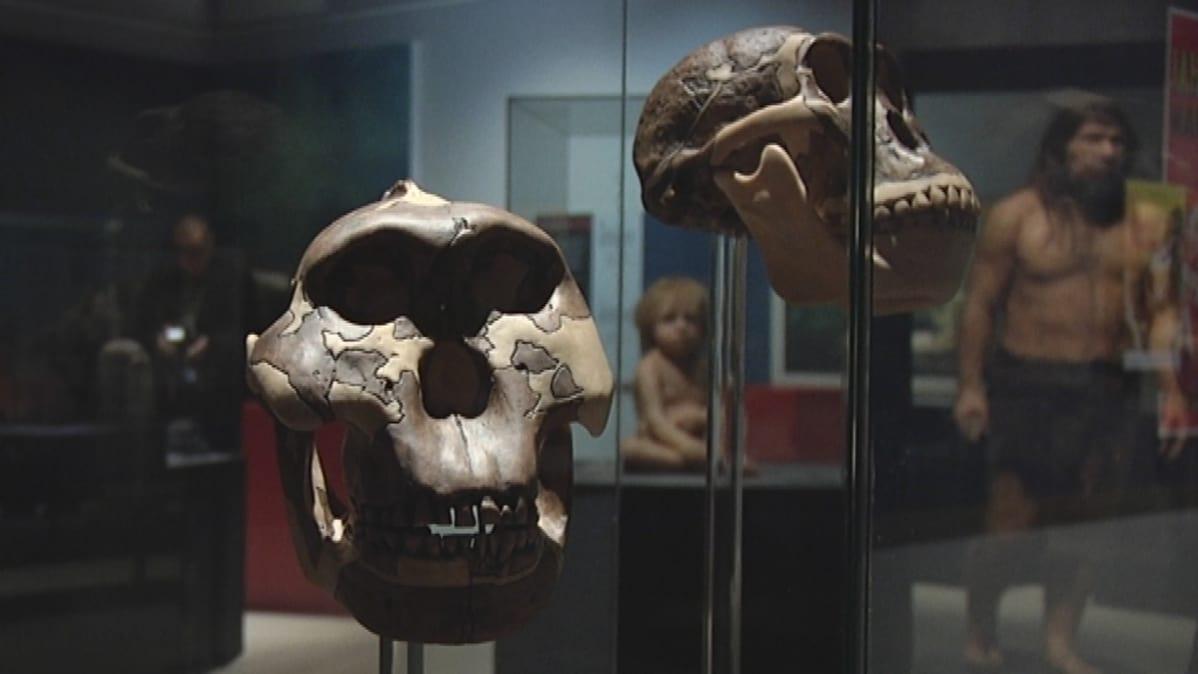 Neandertalit-näyttely Satakunnan Museossa Porissa.