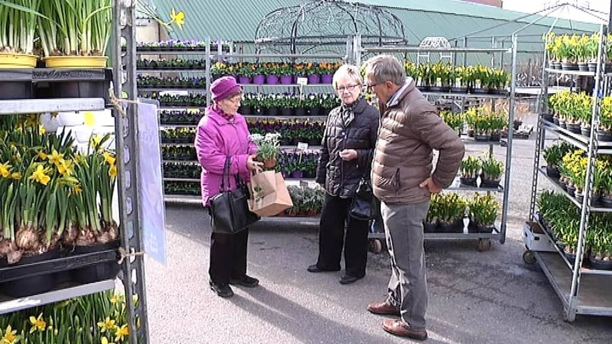 Rouvat kysyvät kauppiaalta kasveista