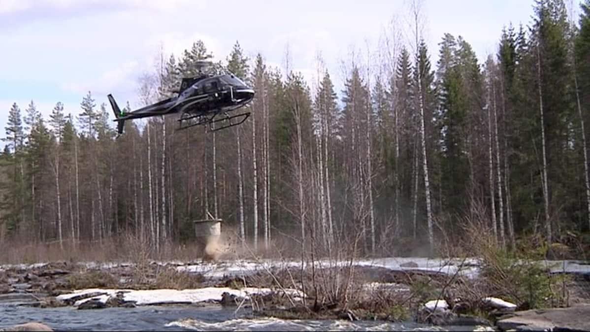 Helikopteri pudottaa soraa Ala-Koitajokeen.