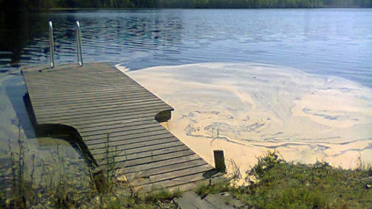 Siitepölyä järven rannassa