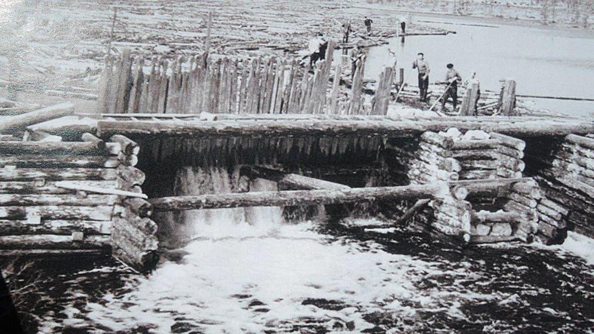 Uittotyötä Pyhäjoen alatammella joskus 1930-luvulla