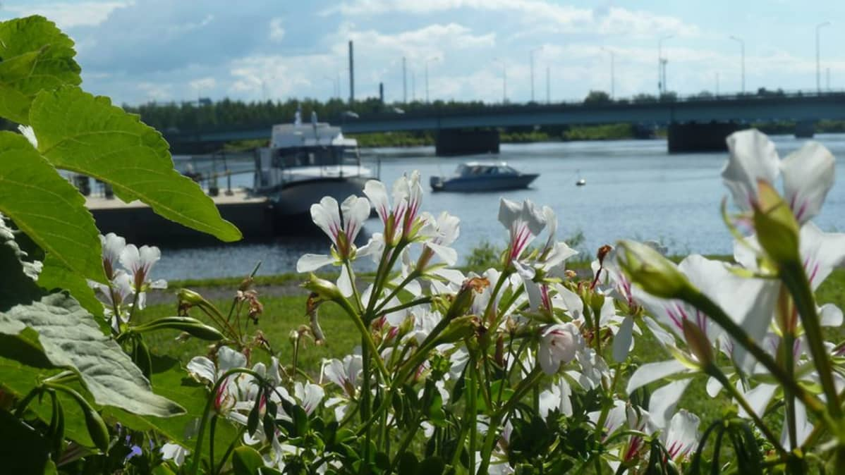 Tornion Nordbergin möljällä kelluu rantaravintolana toimiva Marjuk-laiva.