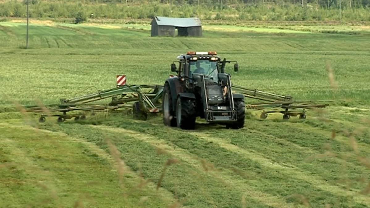 Traktori säilörehutöissä pellolla