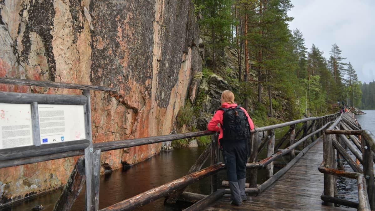 Retkeilijä katselee kalliomaalauksia Hossan Retkeilyalueella, Värikalliolla.