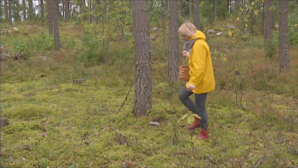 Sieniin törmätään metsässä, mutta arjessa sieniteknologiaa hyödynnetään kaikkialla.