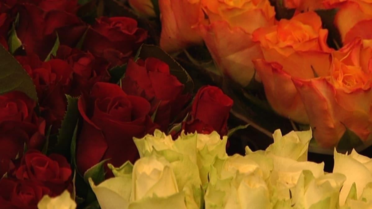 Erivärisiä ruusuja.