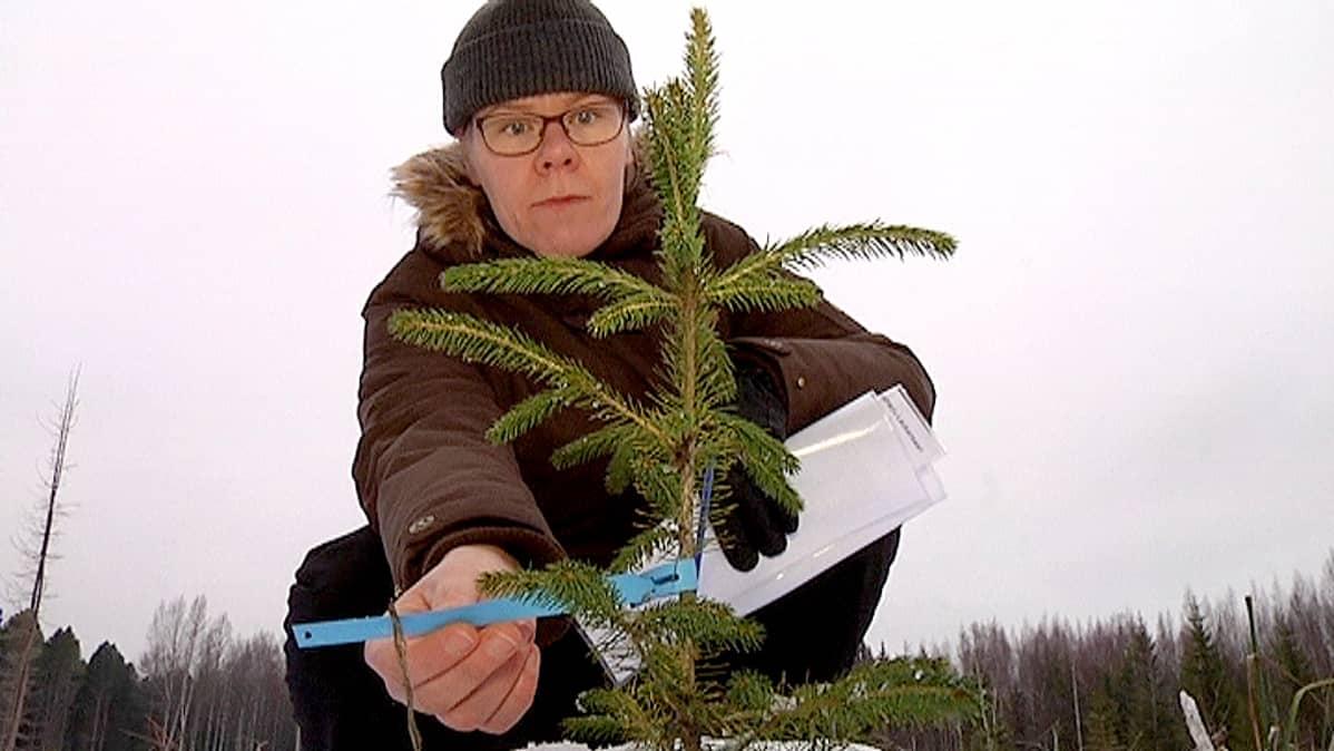 projektipäälikkö Susanne Heiska  Metsäntutkimuslaitos METLA
