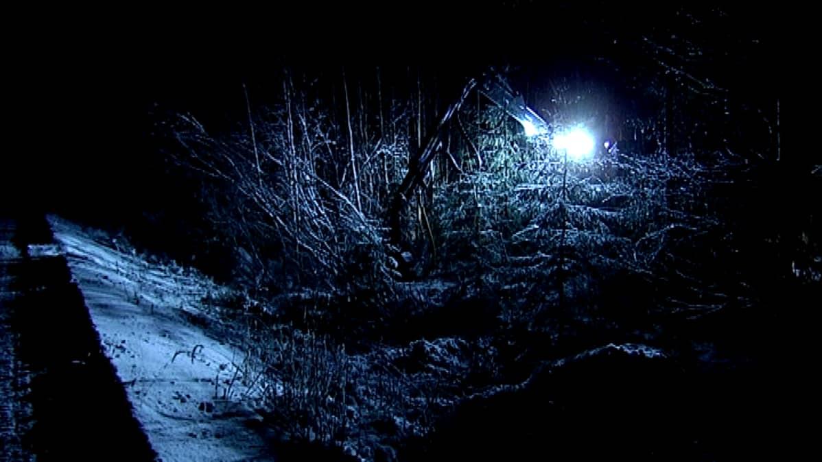 Energiapuuta korjataan pimeässä metsässä.