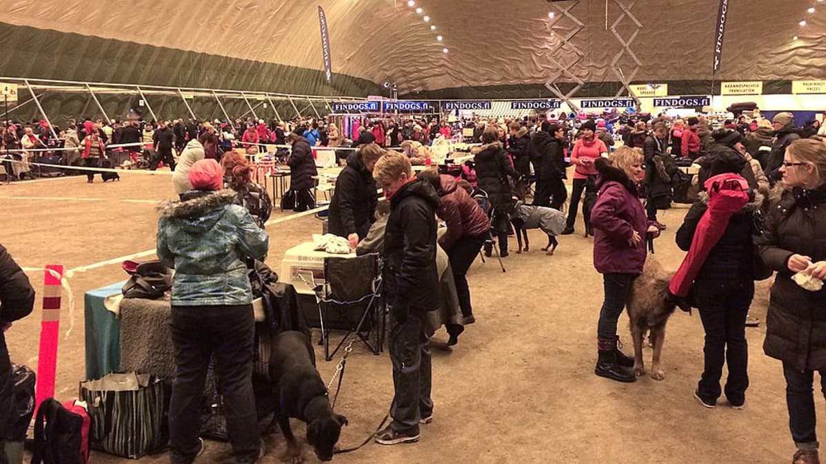 Koiranäyttelyssä ihmisiä ja koiria.