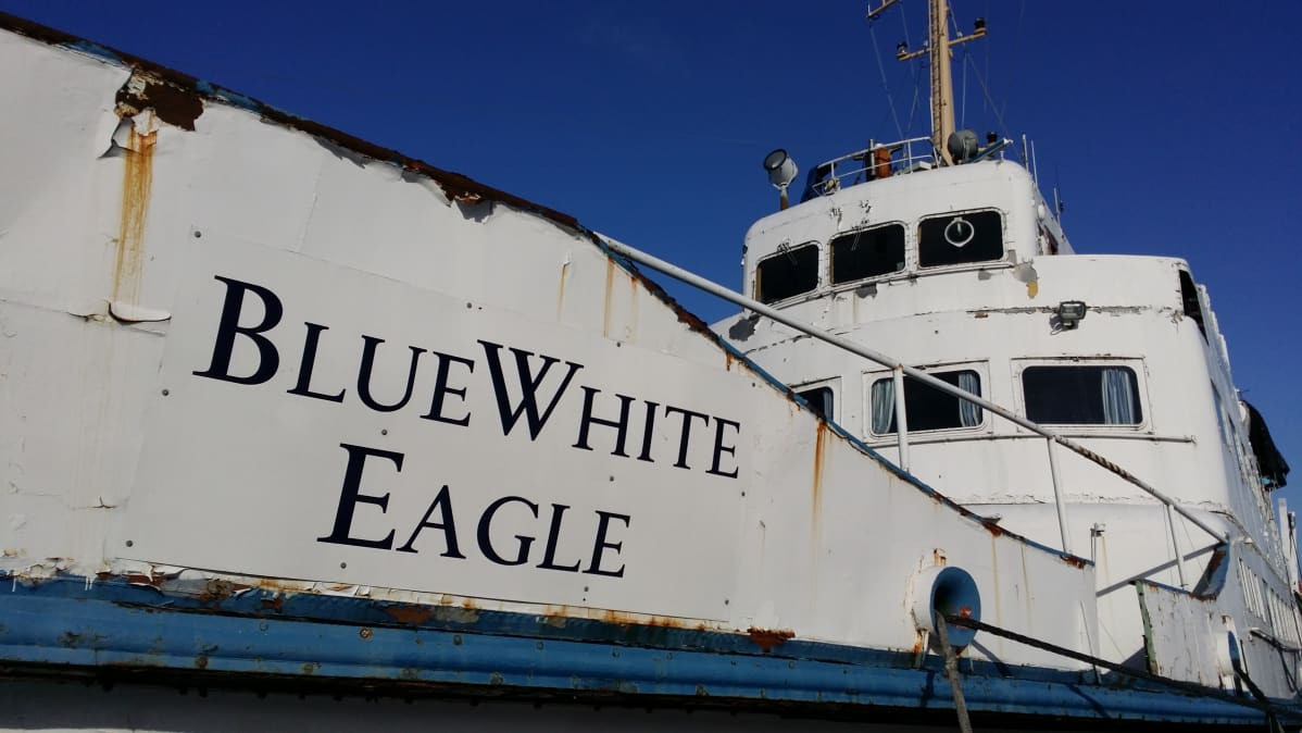 blue white eagle