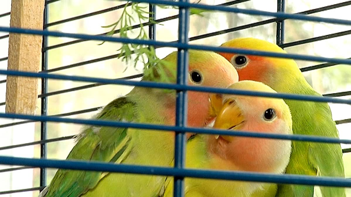 Kirsti Suutarisen lintuja