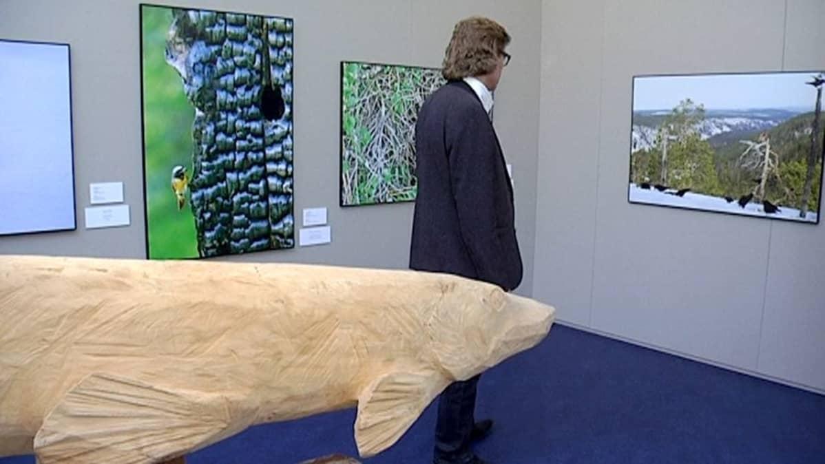 Toiminnanjohtaja Tuomas Hoikkala kävi läpi Vuohijärven luonto- ja kulttuuritalon näyttelyn ennen keskiviikon avajaisia