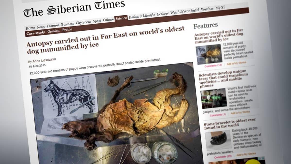 Kuvakaappaus The Siberian Times -lehden nettisivuilta.