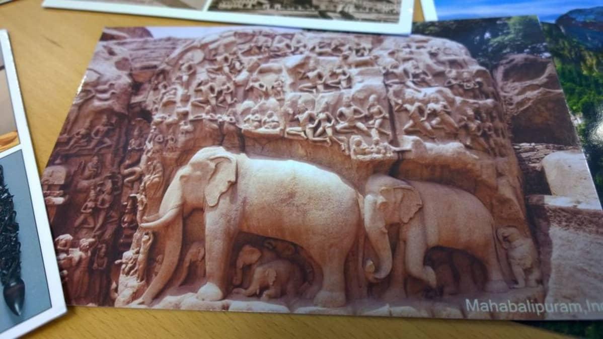 Postikortti, jossa kallikaiverrus elefanteista