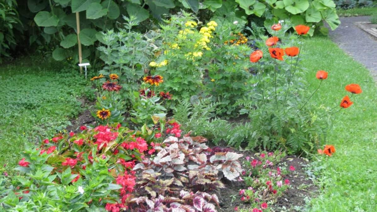 kukkia, puutarha, puisto