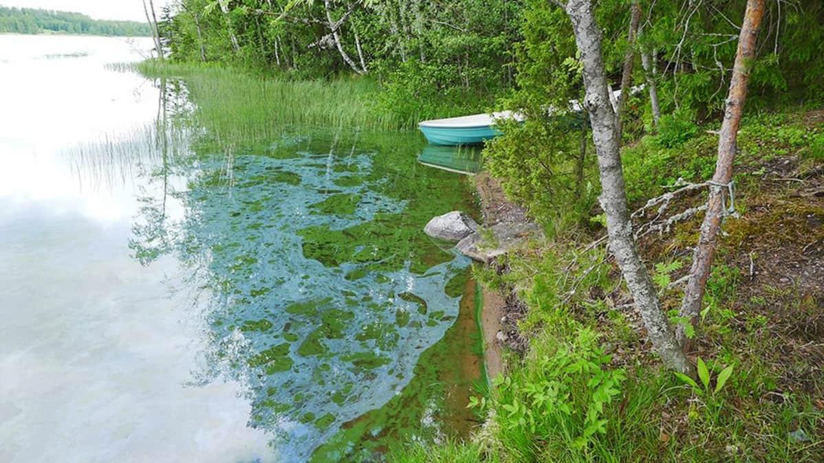 Leväkasvustoa järven pinnalla.
