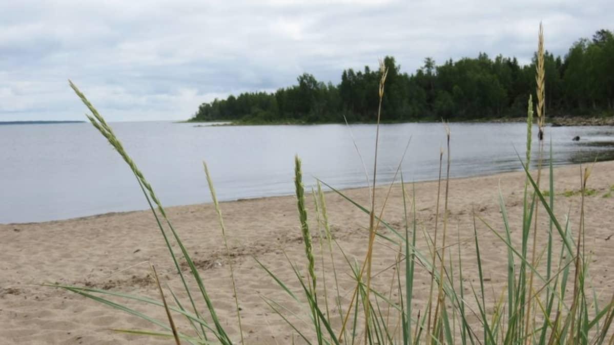 Seskarön ranta.