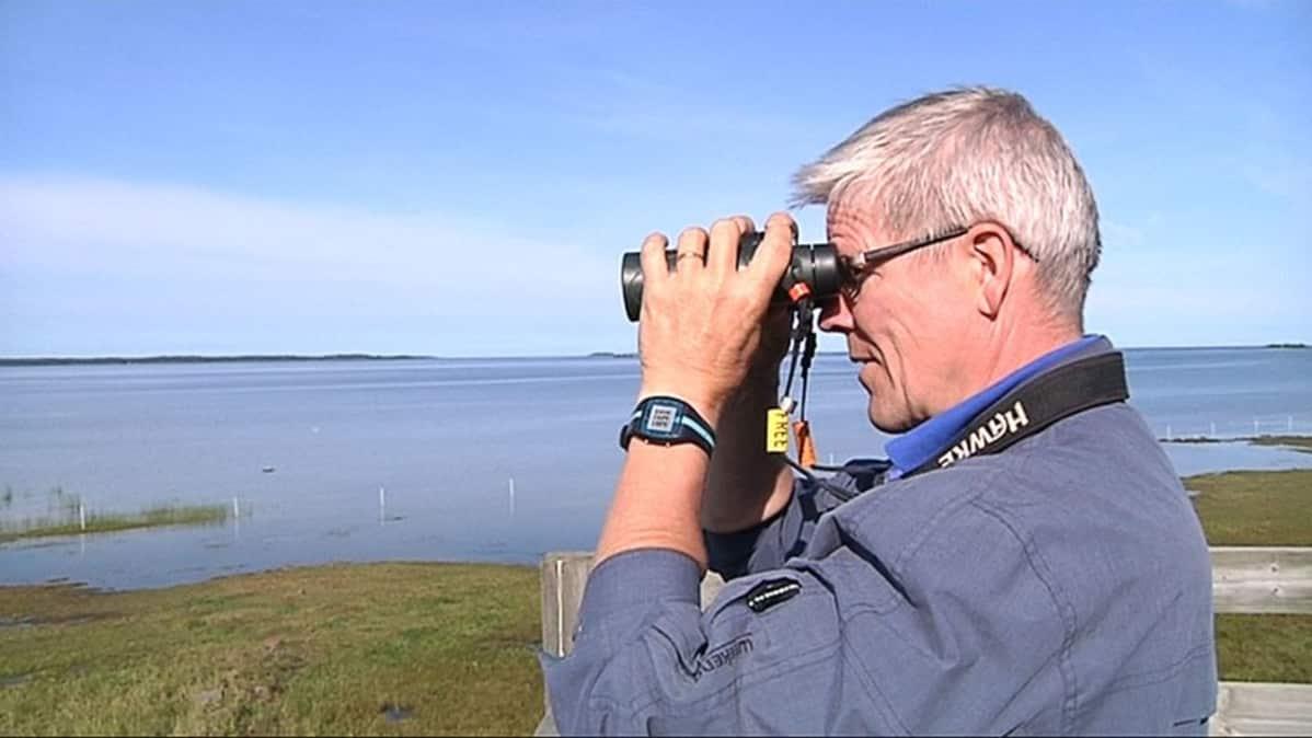 Kuvassa Harri Hongell tähystää kiikarilla lintuja. Taustalla rantaa ja merta, aavaa ja saaria.