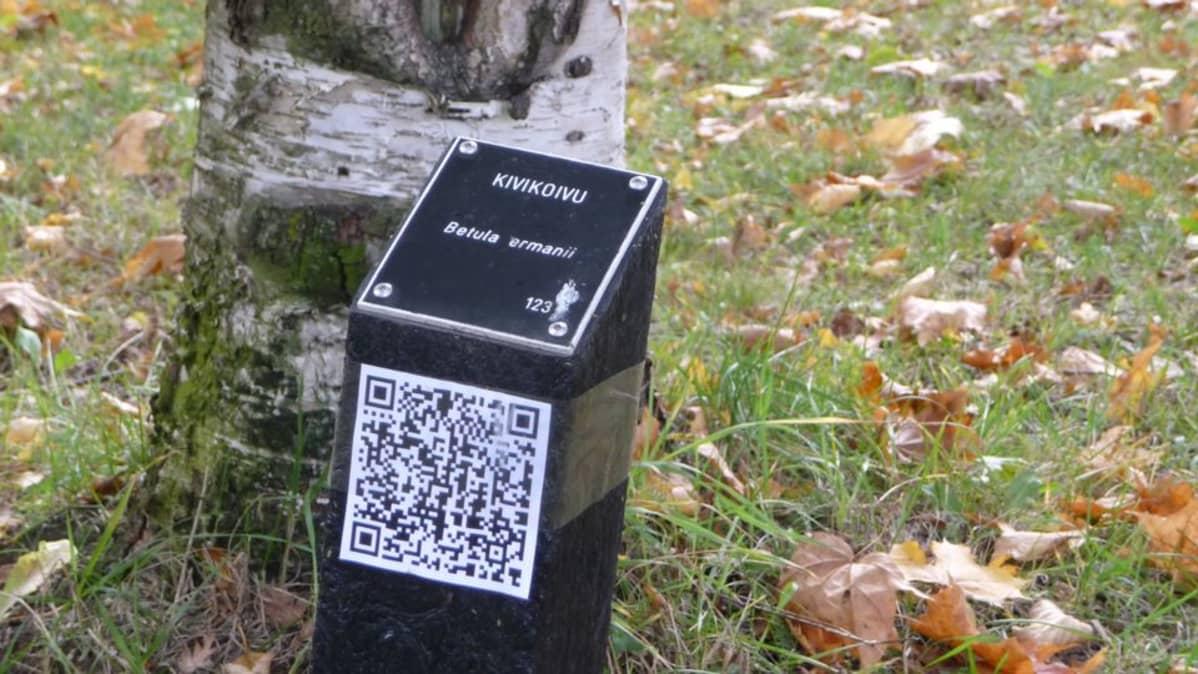 Lappeenrannan arboretumin puista saa lisätietoa mobiilisti.