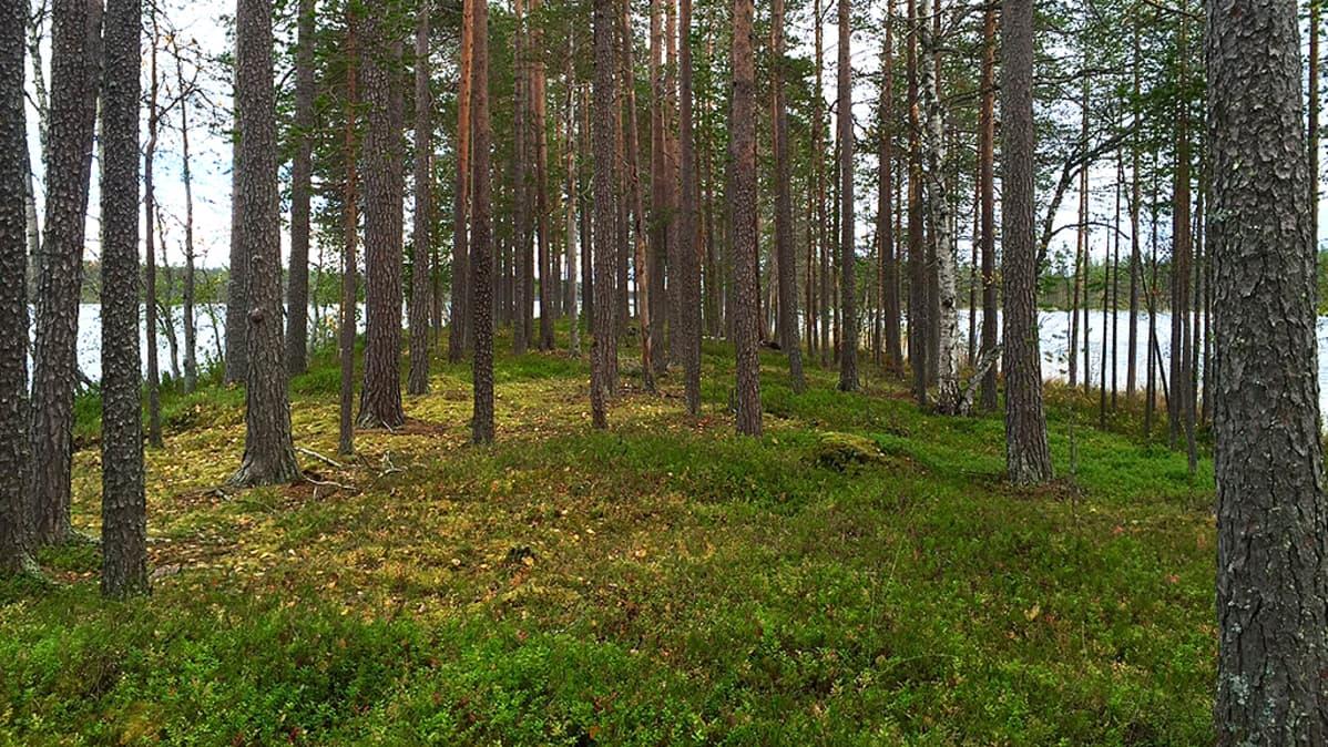 Valtion metsää ja vettä Lapissa