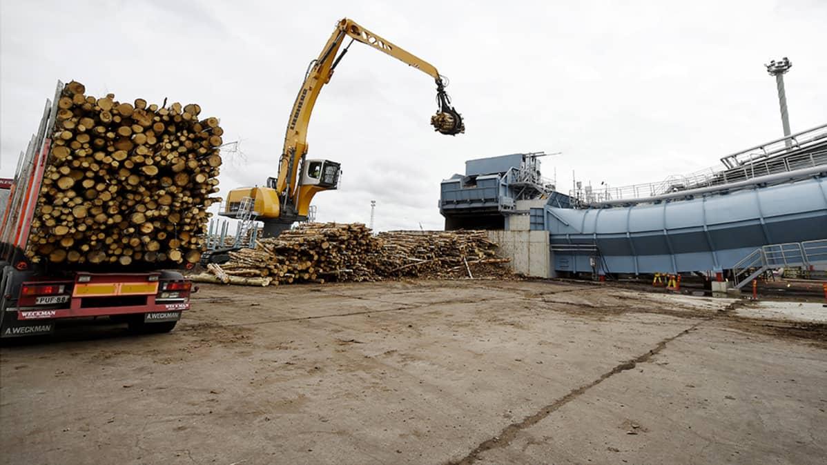 Puuta nostetaan UPM:n Kymin sellutehtaan uuteen kuorimoon.