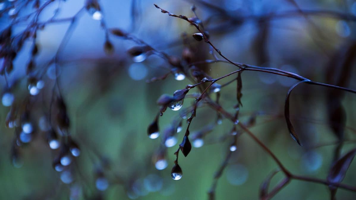 Sadepisaroita