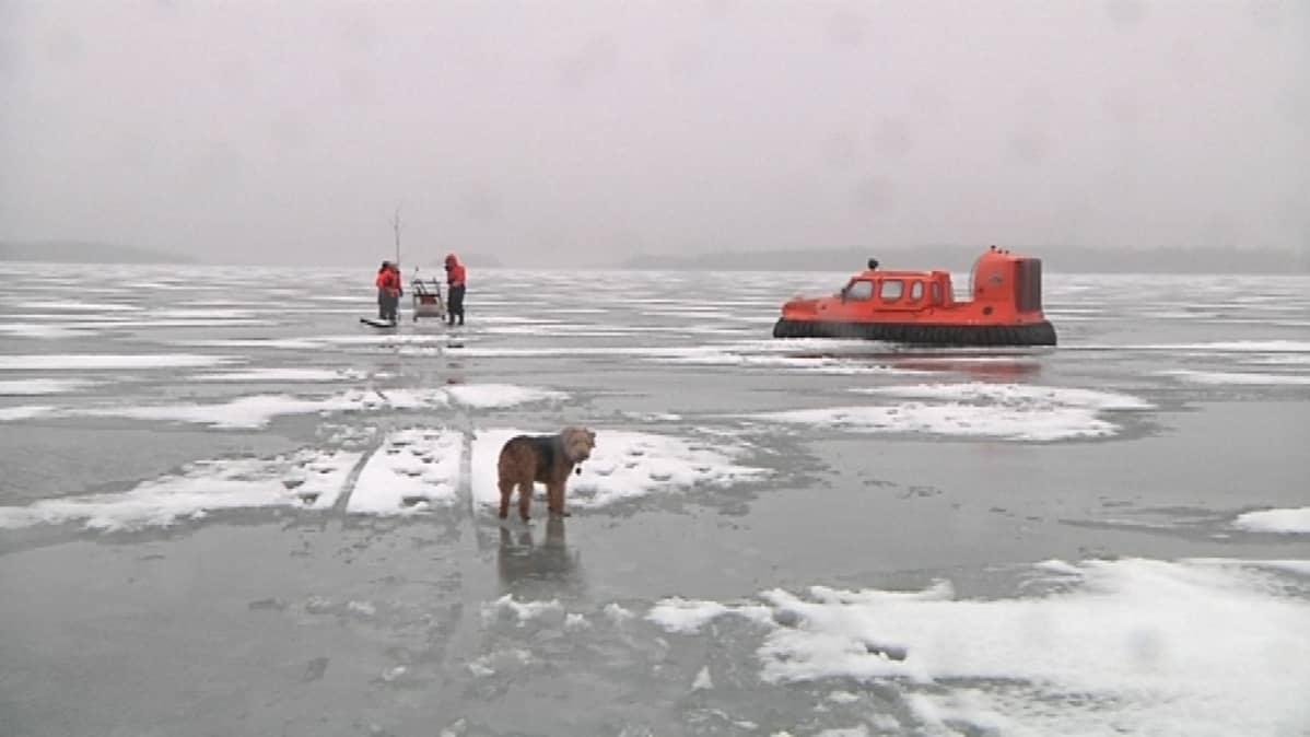 Koira seisoo jäällä. Taustalla on kalastajia ja ilmatyynyalus.