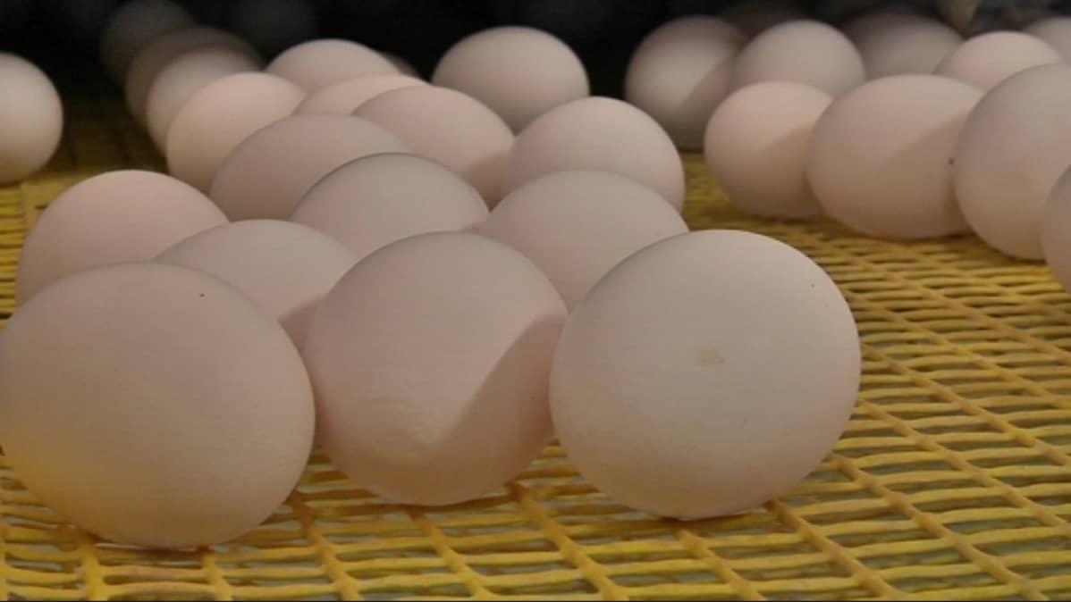 Kananmunia ritilällä