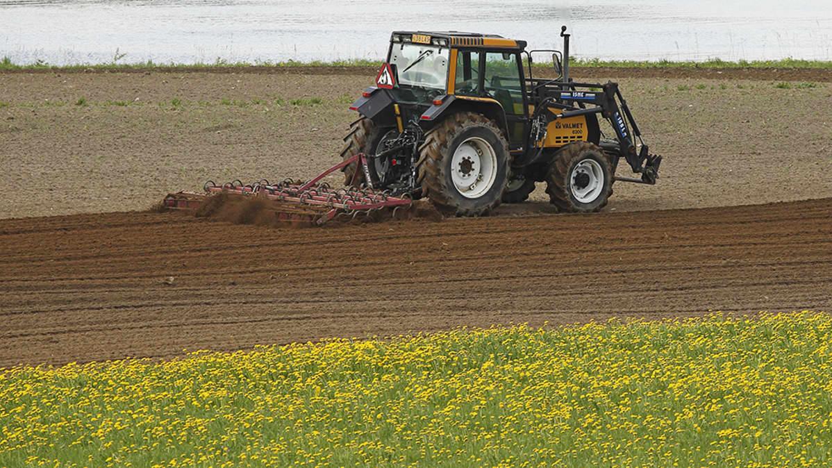 Traktori peltotöissä.