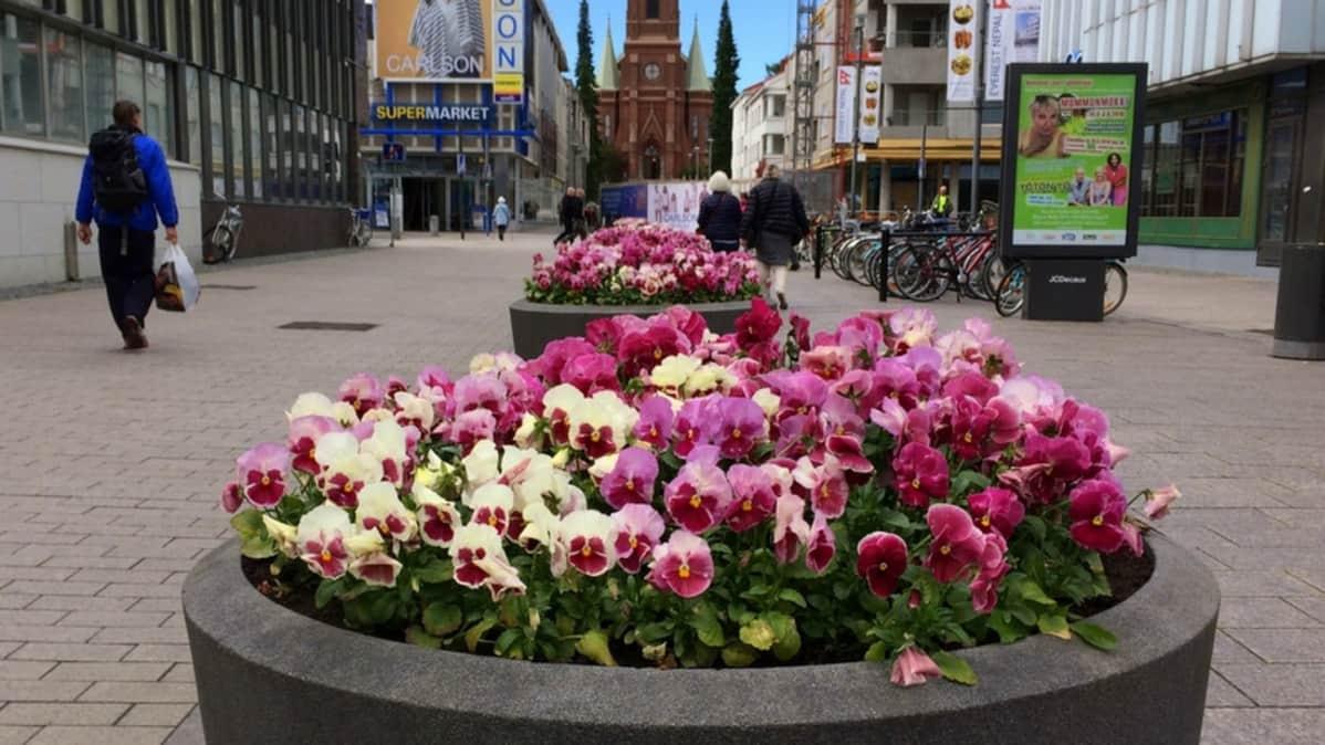 Kukkaistutuksia Mikkelin kävelykadulla.