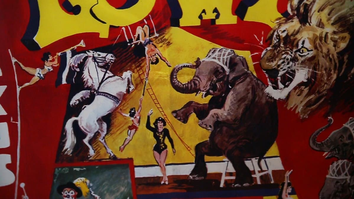 sirkus, hippodrom