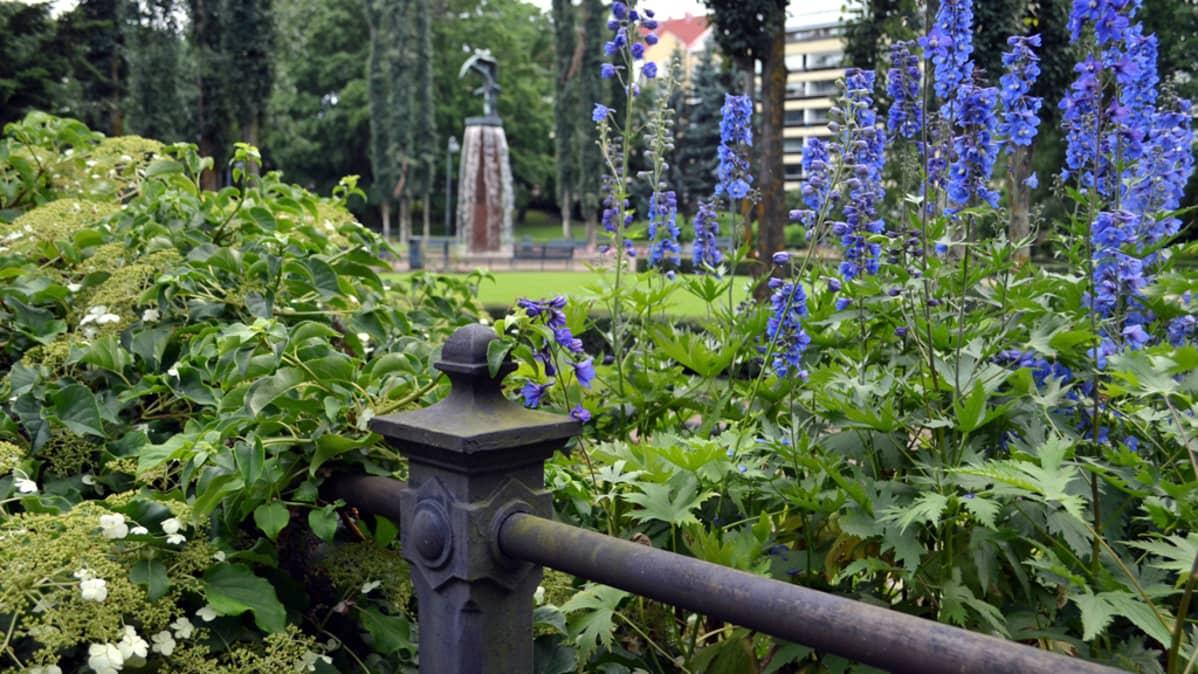 sinisiä kukkia puistossa