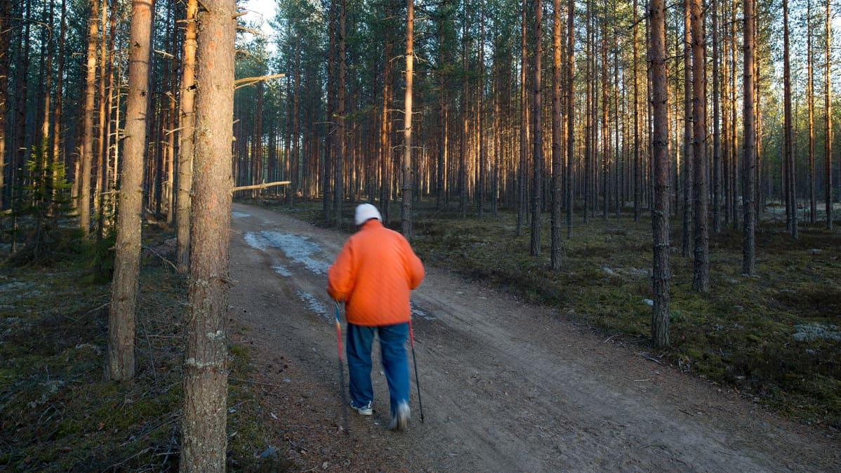 Vanhus sauvakävelee metsässä.