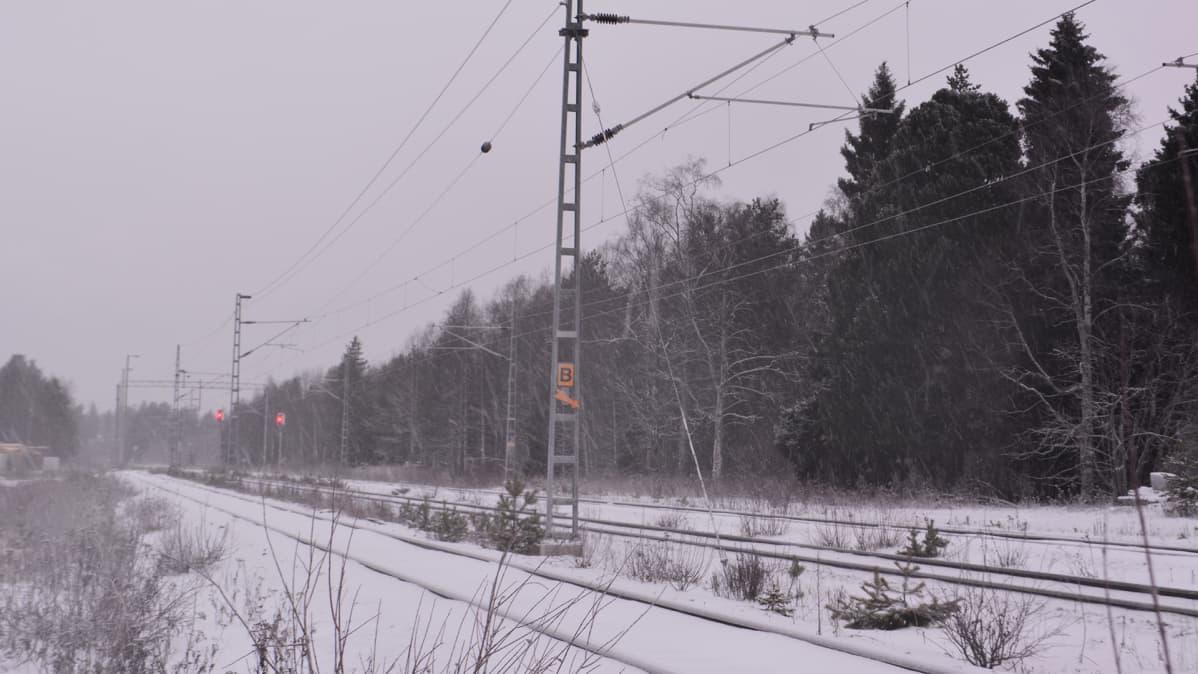 Rautatie metsän lähettyvillä.