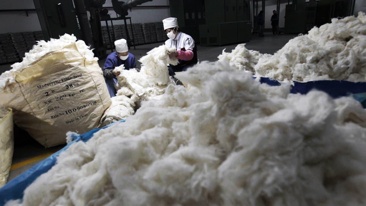 Kiinalaiset työntekijät käsittelevät raakapuuvillaa tekstiilitehtaassa Pekingissä joulukuussa 2011.