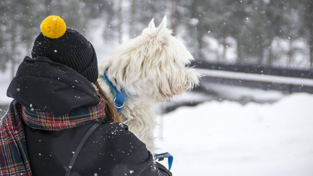 Tiesitkö, että koiran voi rekisteröidä ainakin neljään eri paikkaan? Pakkorekisterin toivotaan selkeyttävän tilannetta