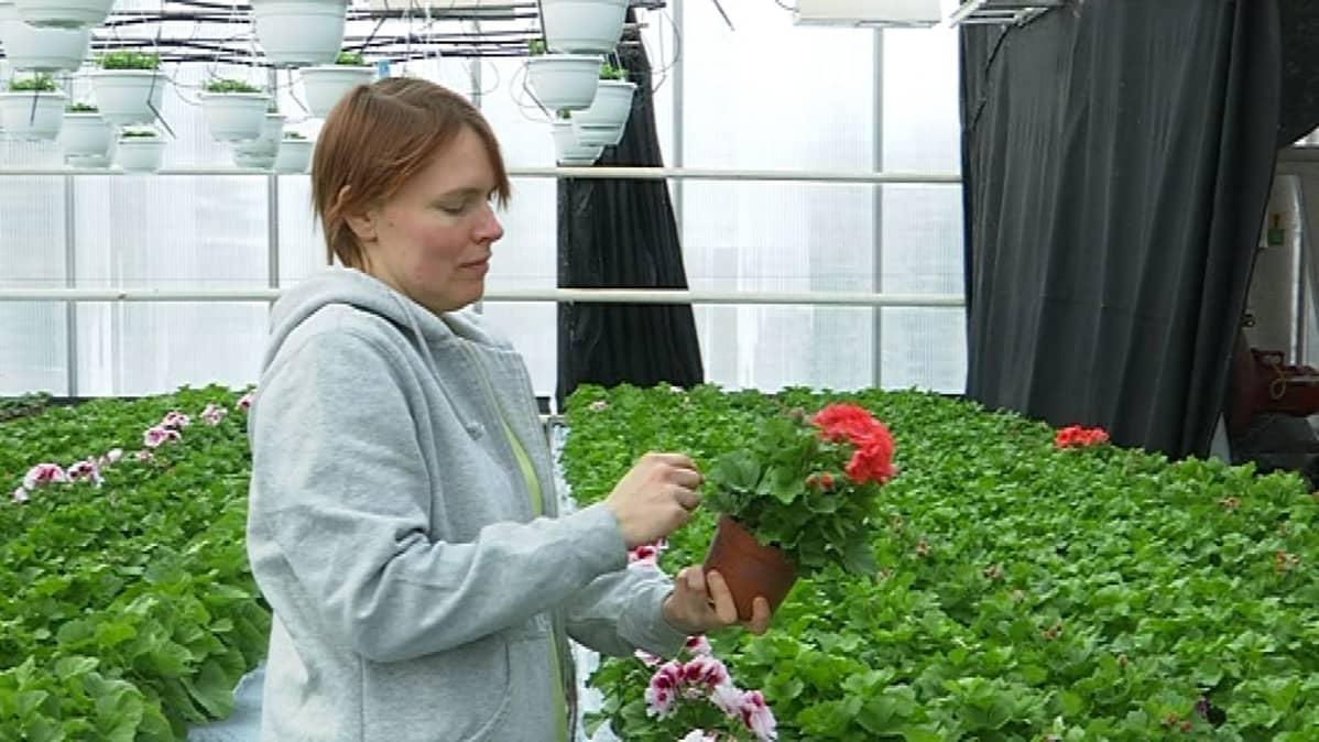 Ylipuutarhuri Henni Koskimäki kasvihuoneessa.