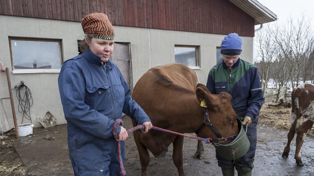 Iivonlahden maitotilan emäntä Anna Rönty seisoo lehmän kanssa