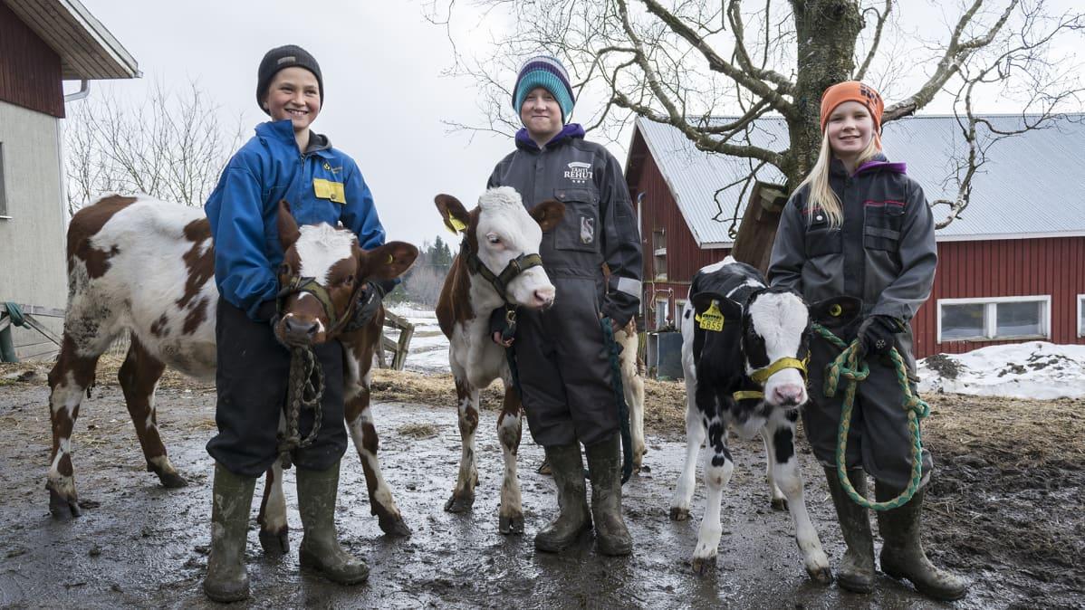 Lapset seisovat vasikoiden kanssa Iivonlahden maitotilalla