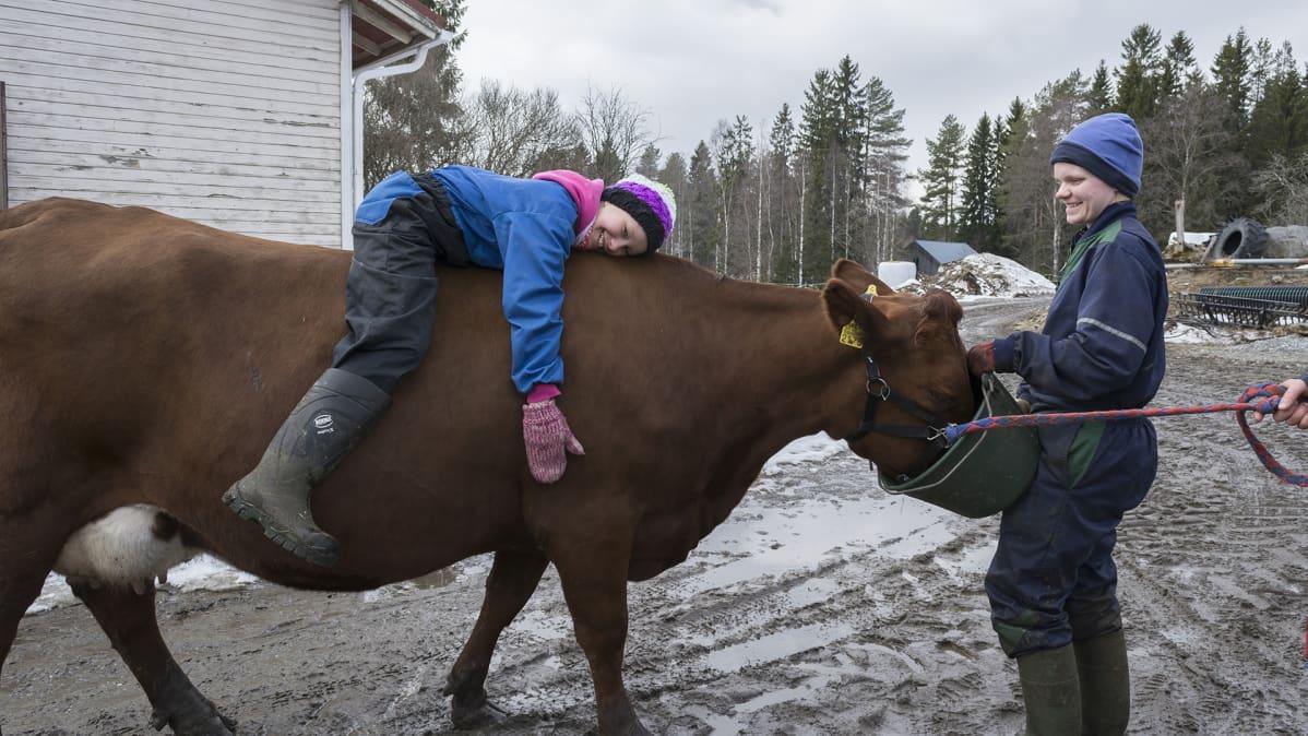 Elli-Noora Härkönen makaa lehmän selässä